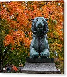 Princeton Panther Acrylic Print
