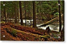 Pristine Forest Acrylic Print