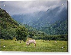 Pristine Pastures  Acrylic Print