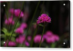 Pretty In Pink Acrylic Print by Yvonne Wright