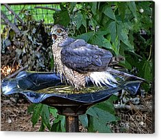 Privacy Please Acrylic Print by Sue Melvin