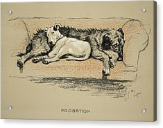 Probation, 1930, 1st Edition Acrylic Print by Cecil Charles Windsor Aldin