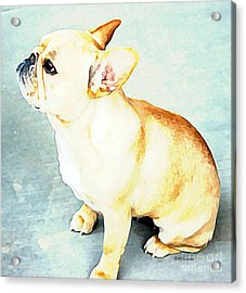 Acrylic Print featuring the painting Profile In Frenchie by Barbara Chichester