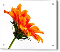 Acrylic Print featuring the photograph Profile Of A Flower by Marwan Khoury
