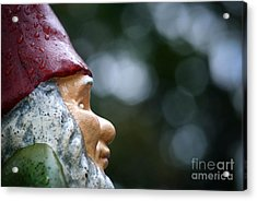 Profile Of A Garden Gnome Acrylic Print by Amy Cicconi