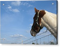 Acrylic Print featuring the photograph Profile Of A Horse by Charles Beeler