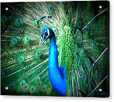 Acrylic Print featuring the photograph Profile Of A Peacock  by Heidi Manly