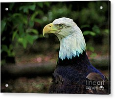 Profile Of America Acrylic Print