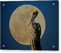 Profile Pic Acrylic Print by Laura Ragland