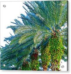 Progression Of Palms Acrylic Print by Joy Hardee