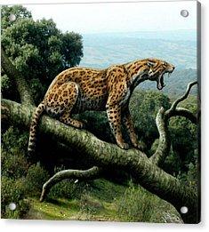 Promegantereon Sabre-tooth Cat Acrylic Print