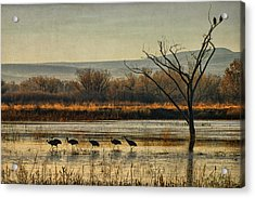 Promenade Of The Cranes Acrylic Print