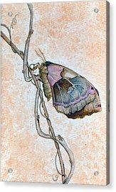 Promethea Moth Acrylic Print
