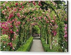 Rose Promenade   Acrylic Print