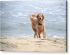 Proof That Dogs Smile Acrylic Print