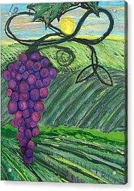 Prophetic Message Sketch 18 Vineyard Infinity Trinity Acrylic Print by Anne Cameron Cutri