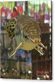 Acrylic Print featuring the photograph Protected Gar by Donna Brown