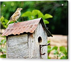 Protecting The Nest  5 Acrylic Print by Judy Via-Wolff