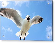 Acrylic Print featuring the photograph Protective Gull by David Rich