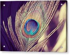 Proud As A Peacock Acrylic Print