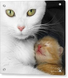Proud Mother Acrylic Print by Jo Collins