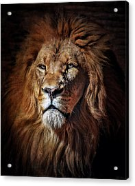 Proud N Powerful Acrylic Print by Elaine Malott