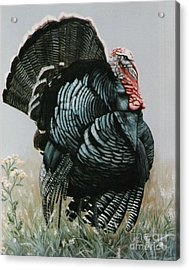 Acrylic Print featuring the painting Proud Ole Tom Turkey by DiDi Higginbotham