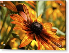 Acrylic Print featuring the photograph Proud Orange by Catherine Fenner