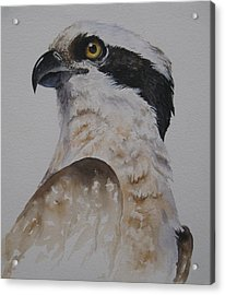 Acrylic Print featuring the painting Proud Osprey by Mary McCullah