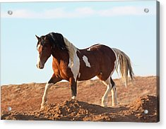 Proud Paint Mustang Acrylic Print