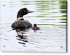 Proud Parent Acrylic Print
