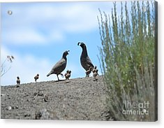 Proud Parents  Acrylic Print