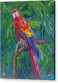 Proud Parrot Acrylic Print