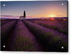Provence Lavender Acrylic Print
