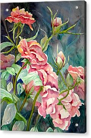 Provence Roses Acrylic Print by Becky Taylor