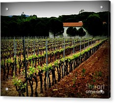 Provence Vineyard Acrylic Print by Lainie Wrightson