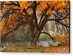Provo Autumn #1 Acrylic Print