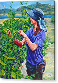 Pruning The Pinot Acrylic Print by Derrick Higgins