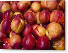 Acrylic Print featuring the photograph Prunus Domestica by Mohamed Elkhamisy