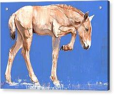Przewalski Foal, 2012, Mixed Media On Paper Acrylic Print