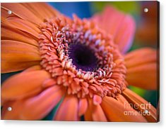 Psychedelic Acrylic Print by Charles Dobbs