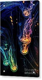 Psychedelic Cnidaria Acrylic Print by Olga Hamilton
