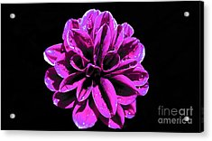 Acrylic Print featuring the photograph Psychedelic Flower 1 by Sarah Mullin