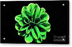 Acrylic Print featuring the photograph Psychedelic Flower 3 by Sarah Mullin