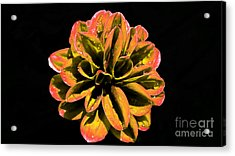 Psychedelic Flower 8 Acrylic Print by Sarah Mullin