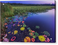 Psychedelic Shore - Great Meadows Nwr Acrylic Print