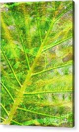 Psychedelic Venation Acrylic Print by Floyd Menezes