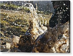 Puddle Jumping Acrylic Print by Darren Edwards