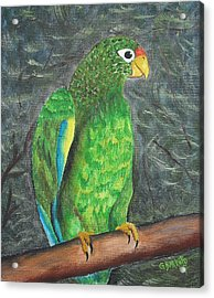 Puerto Rican Parrot Acrylic Print by Gloria E Barreto-Rodriguez