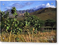 Puerto Rico Cayey Mountains Near Salinas Acrylic Print by Thomas R Fletcher